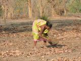 A woman gathering mahua in the forest, salhe village. Photo by Shrishtee Bajpai
